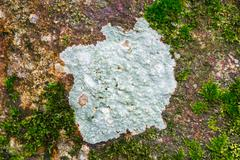 Lichen Stock Photos