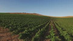 Aerial Vineyard Grape Vines Flying Toward Uphill 4K Stock Footage