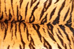 black stripes on tiger textured pelt, real animal fur closeup - stock photo