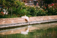 White duck sit near canal. European fauna Stock Photos
