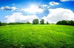 Green lawn and trees - stock photo
