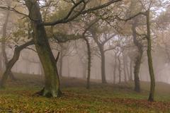 Stock Photo of Autumn mist