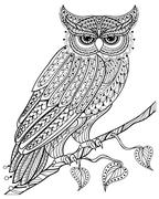 Hand drawn magic Owl sitting on branch for adult anti stress Col Stock Illustration