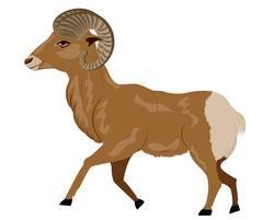 Wild Ram - stock illustration