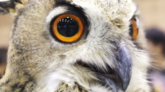 Close up shot of an Eurasian eagle owl looking around Stock Footage