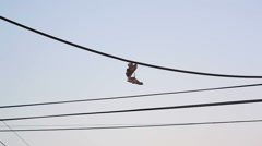 Old shoes hung on electricity telephone line in the street, Tel Aviv, Israel Stock Footage