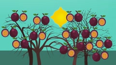Passion Fruit Tree  - Vector Animation - Photosynthesis - stock footage