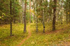 Winding path lane walkway way through beautiful coniferous autum Stock Photos