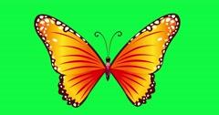 Blue butterfly animation green screen Spring butterfly's wing flight wings. Flyi Stock Footage