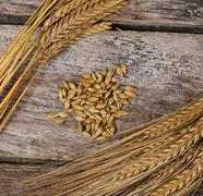 Ears of ripe wheat close up Kuvituskuvat
