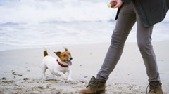Young man playing with his dog on the beach close up slow motion Stock Footage
