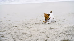 Young man playing with his dog on the beach slow motion Stock Footage