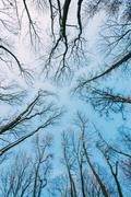 Silhouette Of Trees Branches In Winter On Background Of Blue Sky - stock photo