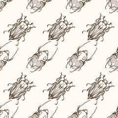 Hand drawn engraving Sketch of Scarab Beetle, May bug or Europea - stock illustration