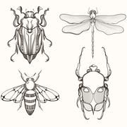 Hand drawn engraving Sketch of Scarab Beetle, May bug, Bee and D Stock Illustration