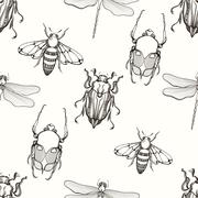 Hand drawn engraving Sketch of Scarab Beetle, May bug, Bee and D - stock illustration