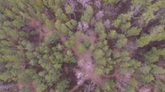 Stock Video Footage of flying over the treetops