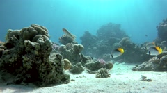 The beauty of the underwater world. Stock Footage