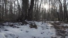 Winter Woodland Stock Footage