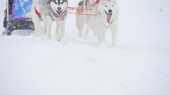 Musher hiding behind sleigh at sled dog race in slow motion Stock Footage