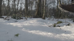 Hiker Walking Through A Winter Woodland Stock Footage