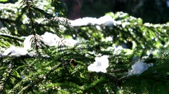 Snow melts on a tree branch sunlit spring forest. Stock Footage