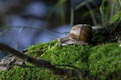 Snail in the natural environment Stock Photos