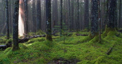 Magical Forest of Mystery Light Beam Pan Stock Footage