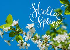 Blossoming apple-tree on background of green grass with letters Hello sprint - stock photo