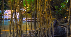 Vines hung from tree in Thailand wilderness of jungle rainforest nature reserve - stock footage