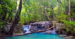 Idyllic scene of beautiful and exotic nature in wild rain forest of Thailand Stock Footage