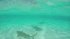 SLOW MOTION UNDERWATER: Blacktip sharks swimming in shallow lagoon - stock footage