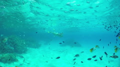 SLOW MOTION UNDERWATER: Woman snorkeling exotic reef with tropical fish Stock Footage