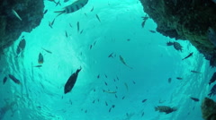 SLOW MOTION UNDERWATER: Seaworld on tropical reef with exotic fish - stock footage