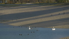 Ducks and swans swimming in Jarun Lake and birds on the shore, Zagreb Stock Footage