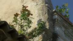 Rose plant on the roof of an old building in Saint-Paul-de-Vence Stock Footage