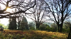 The big tree without leaves standing in a meadow somewhere in the woods - stock footage