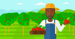 Farmer collecting apples - stock illustration