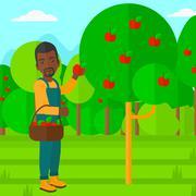 Farmer collecting apples - stock illustration