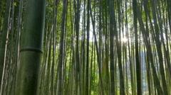 Bamboo trees at Arashiyama bamboo grove, Kyoto, Japan Stock Footage