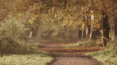 Autumnal Leaves In An English Park Stock Footage