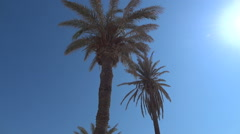 Palm trees blowing in the wind 21 Stock Footage