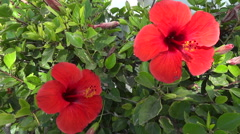 Green Leaves And Red Flowers Stock Footage