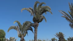 Palm trees blowing in the wind 18 Stock Footage