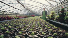 Interior of a commercial greenhouse for cultivating potted houseplants for Stock Footage