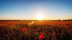 Sunset with poppies - stock photo