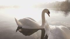 Elegant Swan On A Beautiful Misty Morning Lake Stock Footage