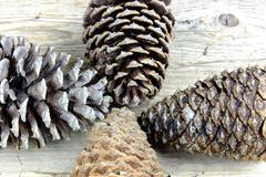 Four big pinecones on old wooden table, forest, nature - stock photo