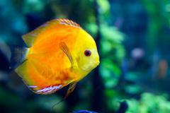 Colorful sea fish in the aquarium Stock Photos