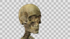 Skull spinning alpha channel loop Stock Footage